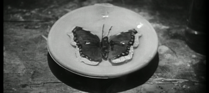 Vignette papillon
